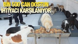 BALIKESİR'DE TAKDİR EDİLEN ÇALIŞMA!