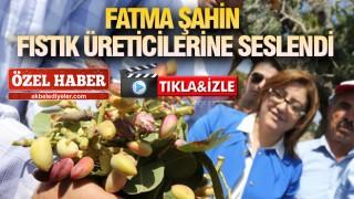 GAZİANTEP'TE FISTIK HASADI BAŞLADI
